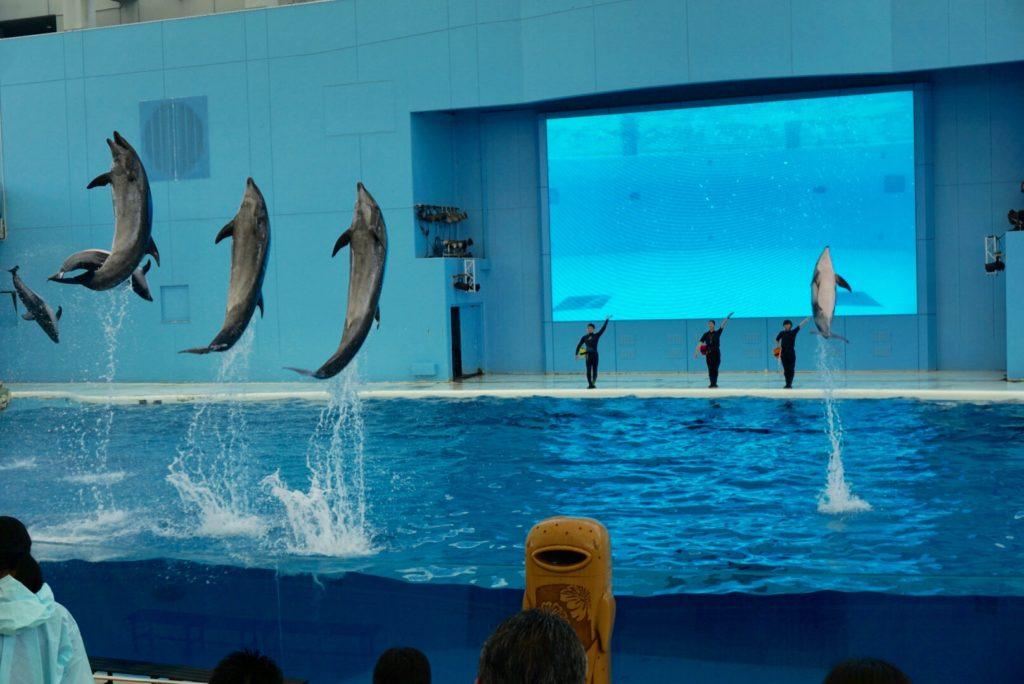 シーパラ水族館